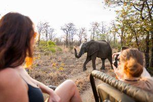 photo safari